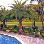 backyard with pool, diamond shape stones floring, ang royal palm trees around the pool