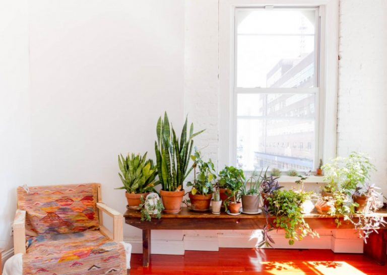 Wonderful indoor planting idea choices to choose from for Living room plants