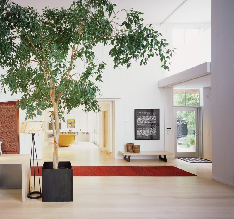 indoor planting idea modern entry tree carpet wall decor painting bench glass door modern lamp