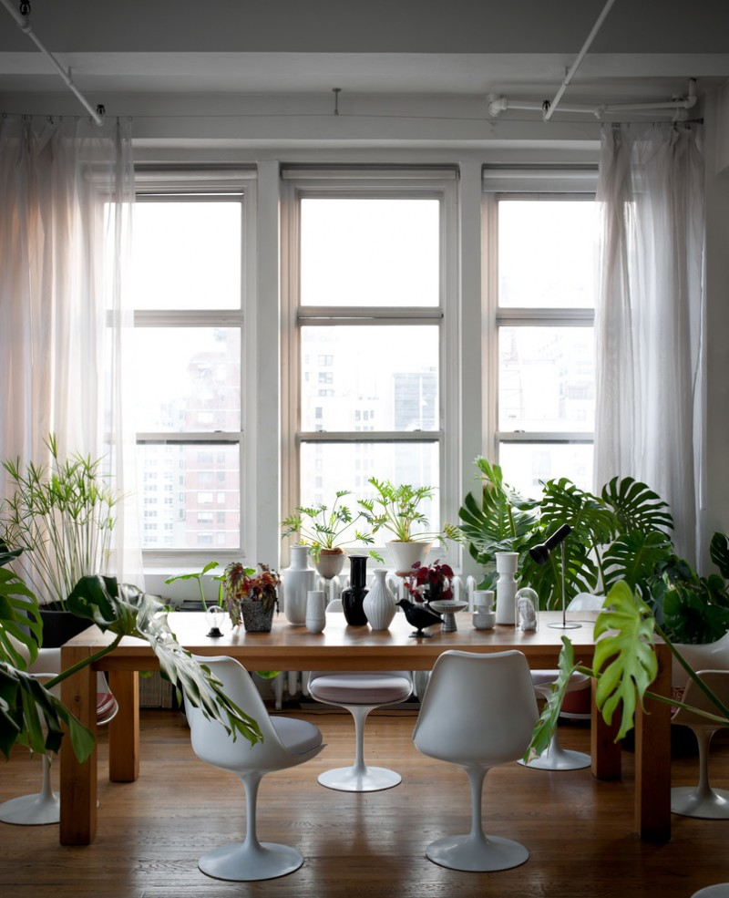 indoor planting idea unused dining room wood floor chairs long table big windows curtains plants