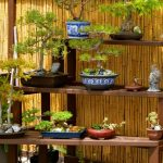 japanese garden exhibition model beautiful fence shelves pots plants green brown asian landscape