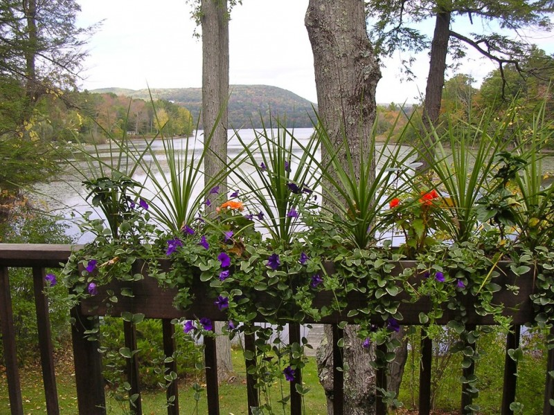 outdoor metal railing with flower design ideas purple flowers orange red landscape trees water plants