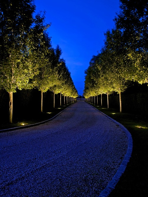 trees uplighter for long driveway in traditional landscape style