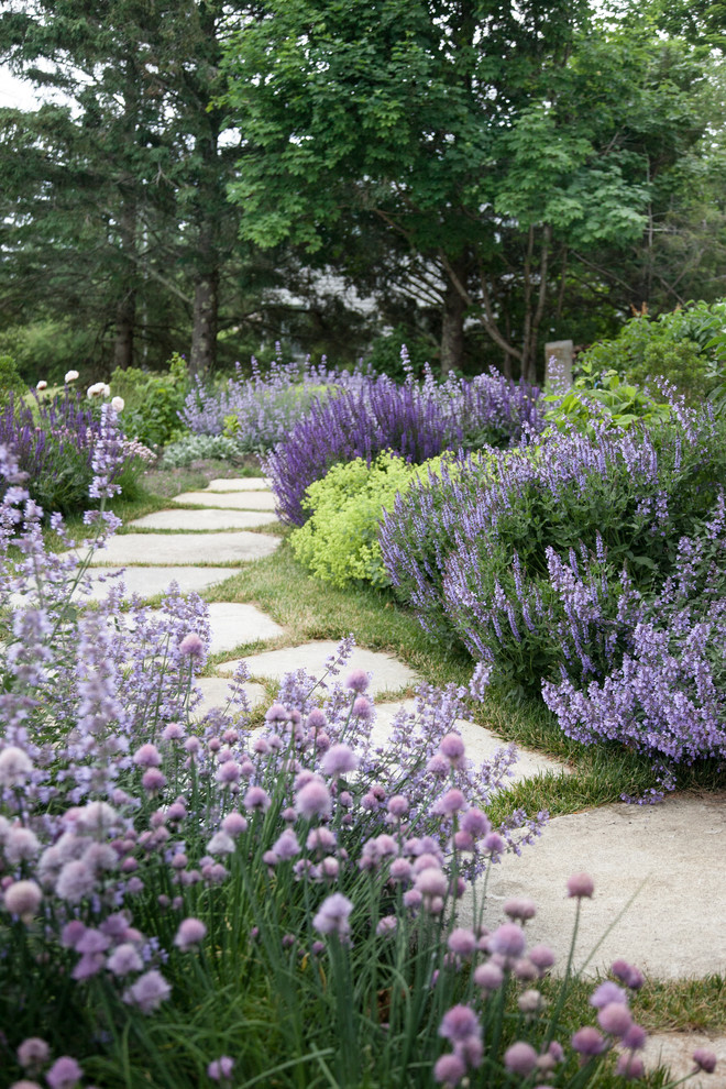 Yard With White Stones Path Many Kinds Of Lavender On Both Sides