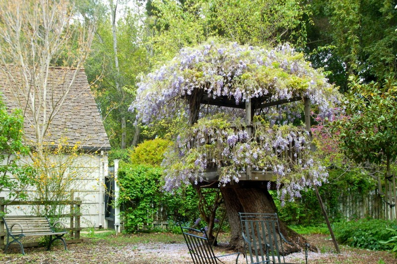 treehouses for kids bench chairs wood fence wisteria roofs board walls tree frame rustic design