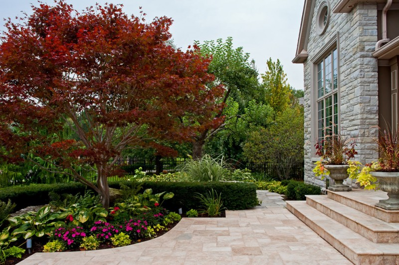 Traditional Front Yard Landscape With Natural Stone Pavers Maple Tree  Exposed Mortar Stone Wall Concrete Flower
