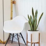 Indoor Snake Plant With White Pot In Wooden Stand