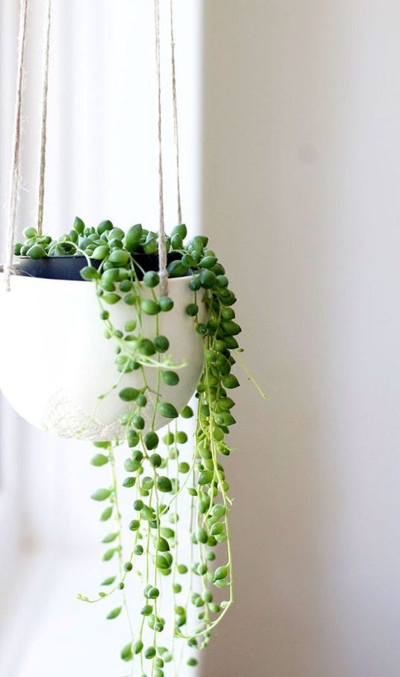 strands of pearls on white pot hanging
