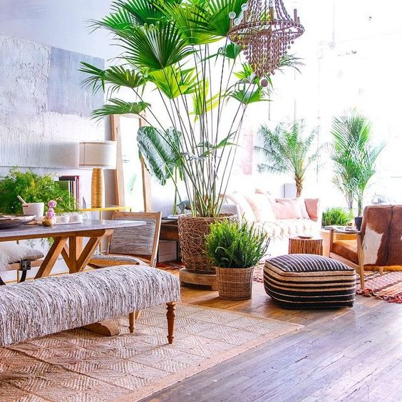 open room, wooden floor, grey wall, dining table chair bench, living room sofa, chair, ottoman, big plants on rattan pots