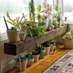 Pots Of Plants On The Low Wooden Bench, Wooden Floor, Rug