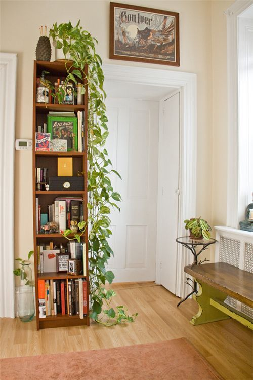 white pot, vine going down, wooden book shelves, wooden floor, pink rug,