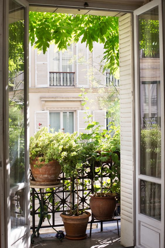 window with vines, plants, plants on pots on the rail