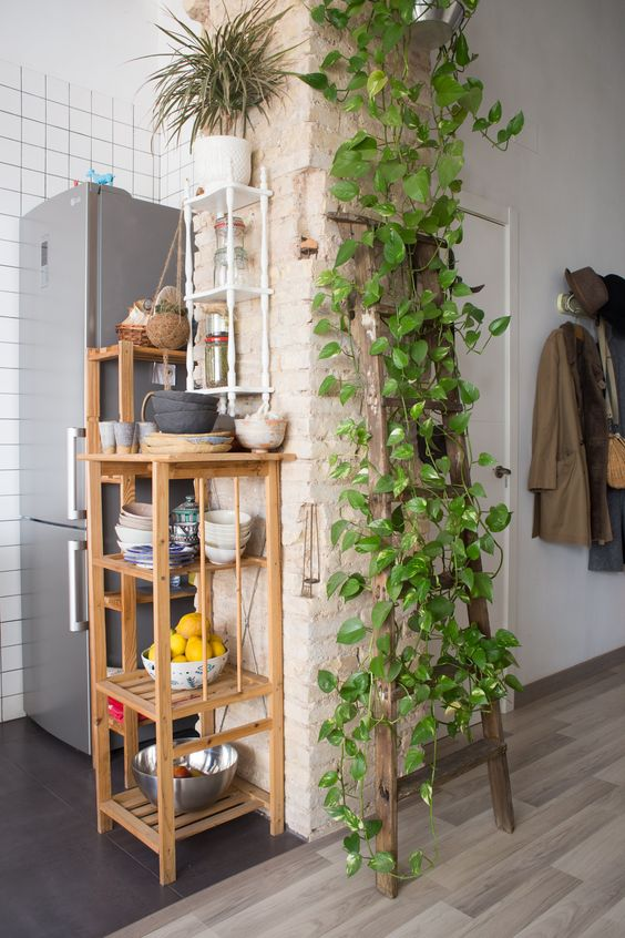 vines on the wall and rack, open brick kitchen, wooden floor, black floor