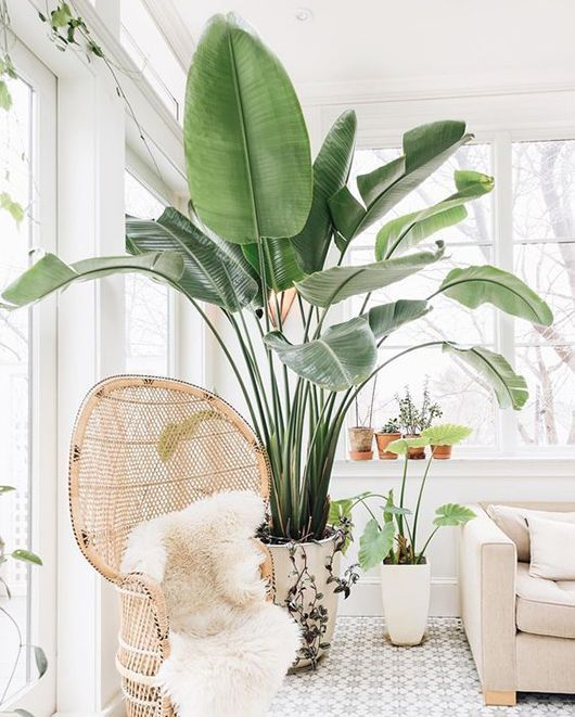 room corner with white wall, white patterned floor, white sofa , rattan chair, plants in whit epot