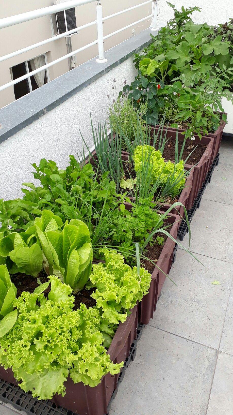 big pots on the balcony