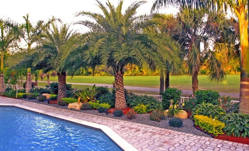 backyard with pool, diamond shape stones floring, ang royal palm trees around the pool