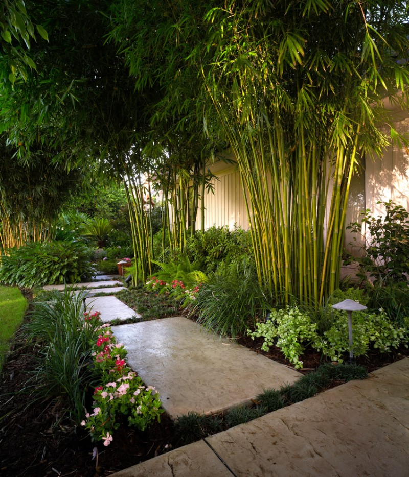 slope backyard with concrete pads, trees, flowers, asian lemon bamboos