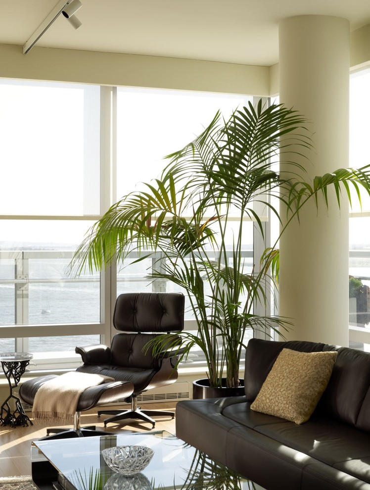 indoor planting idea contemporary living room palm sofa pillow pillar glass top table chair small table