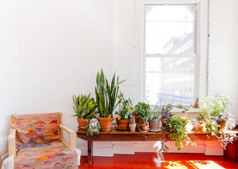 indoor planting idea living room pots plants chair red floor window white wall eclectic room