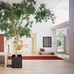 indoor planting idea modern entry tree carpet wall decor painting bench glass door modern lamp