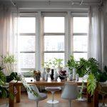 indoor planting idea unused dining room wood floor chairs long table big windows curtains plants