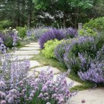Yard With White Stones Path, Many Kinds Of Lavender On Both Sides