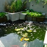 back yard pond fish plants water outdoor area contemporary landscape