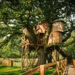 Treehouses For Kids Bridge Half Pace Stairs Windows Roofs Wood Exterior Rustic Design