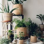 Sisal Woven Baskets For Plants, Small And Big