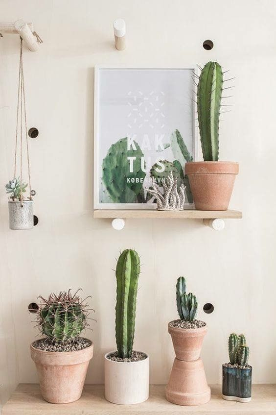 a variety of cacti in several different pots on the floor and shelves