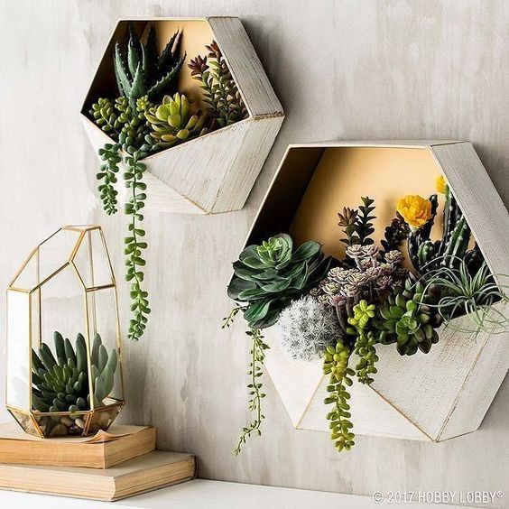 cacti inside beautiful box pots and clear glass cage