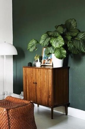 calathea plant on top of the wooden cabinet, green painted wall, brown woven ottoman, white floor lamp