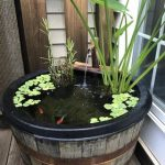 Wooden Barrel As Little Pond With Fishes And Plants