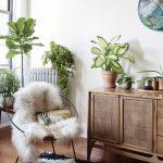 Wooden Cabinet With Rattan Doors, Drawers, Wooden Floor, Rug, Roud Chair, Plants