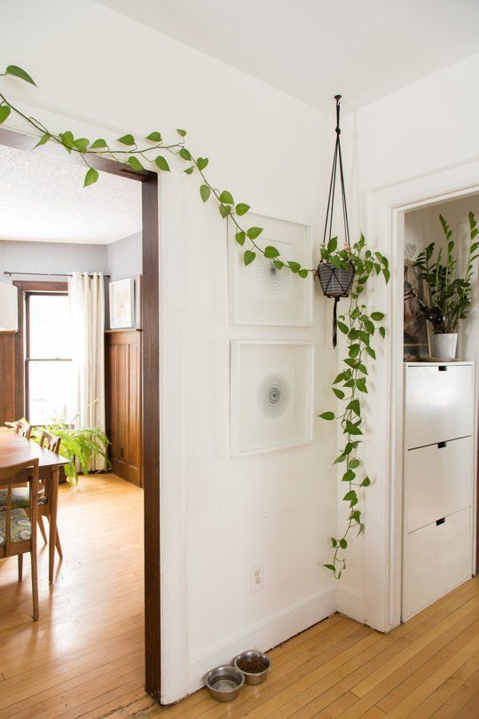 pot of vine hung on from the ceiling, trail to the wall above the door