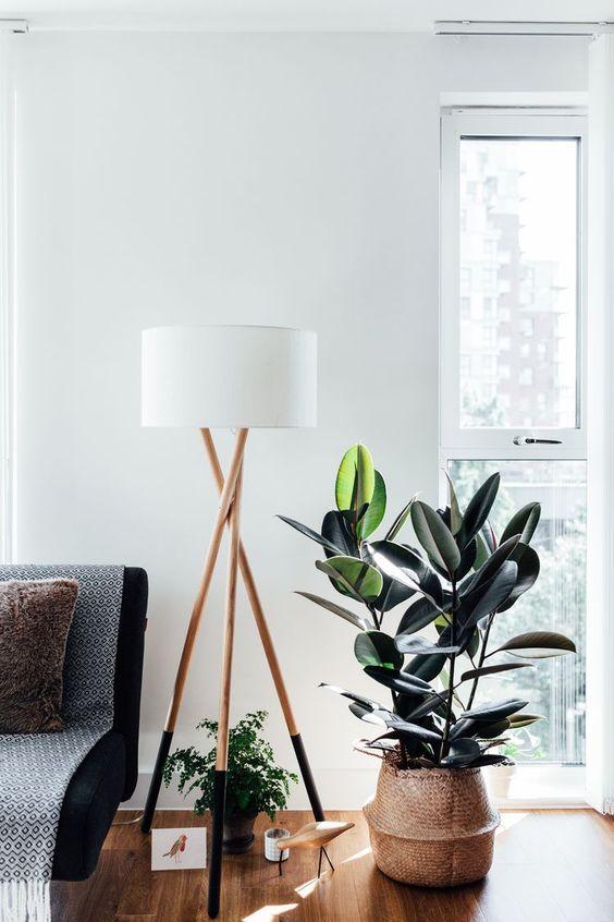 rubber plant in window corner of scandinavian room
