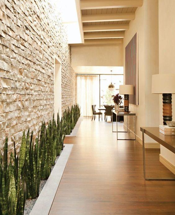snake plant in veranda as border and natural walldecor