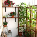 Vines On The Pots To The Wooden Frame Near Therail, Floating Shelves