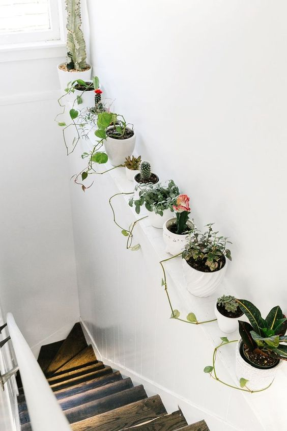 pot of plants along the wall on the stairs, wooden stair